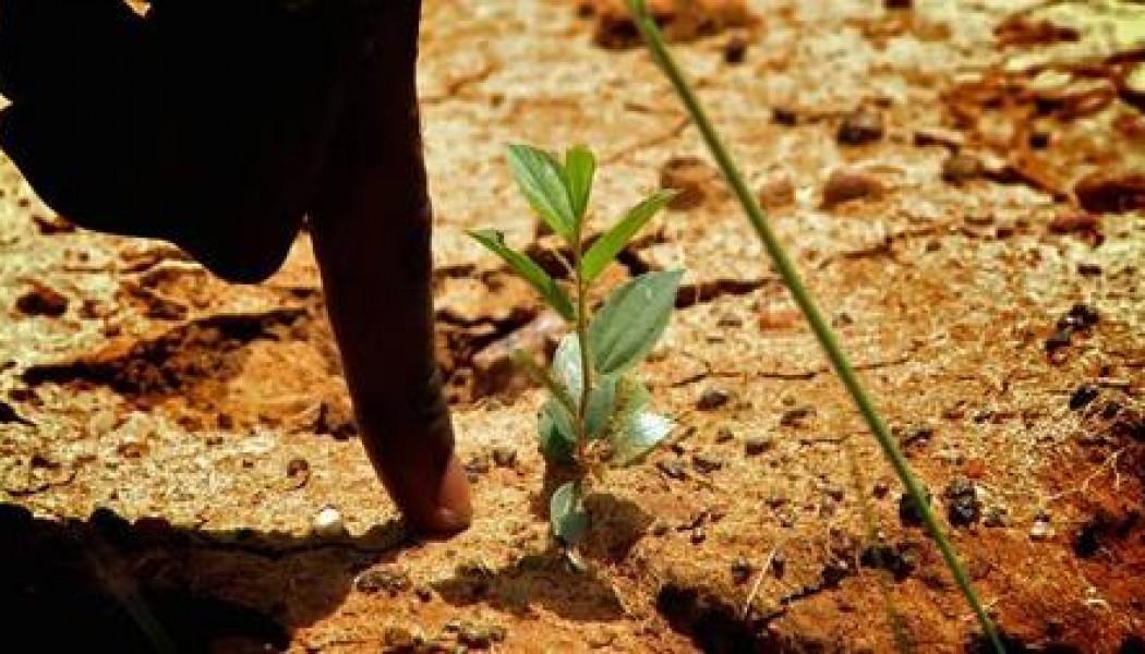 Ecosia, el buscador de internet que planta árboles cada vez que lo usas