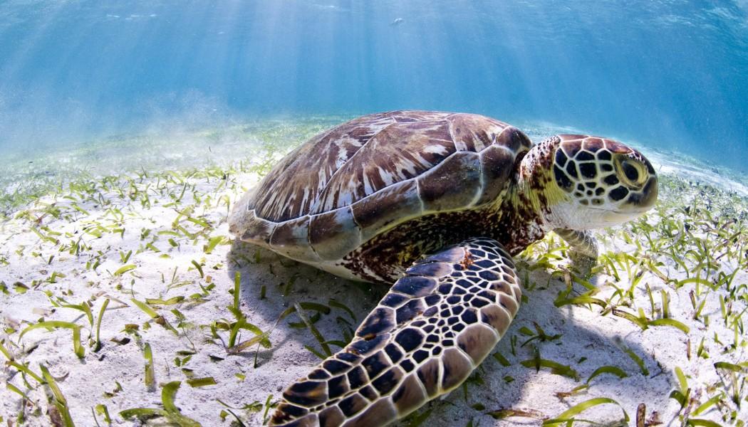 """WWF lanza campaña mundial """"Juntos, Salvemos nuestro patrimonio común"""""""