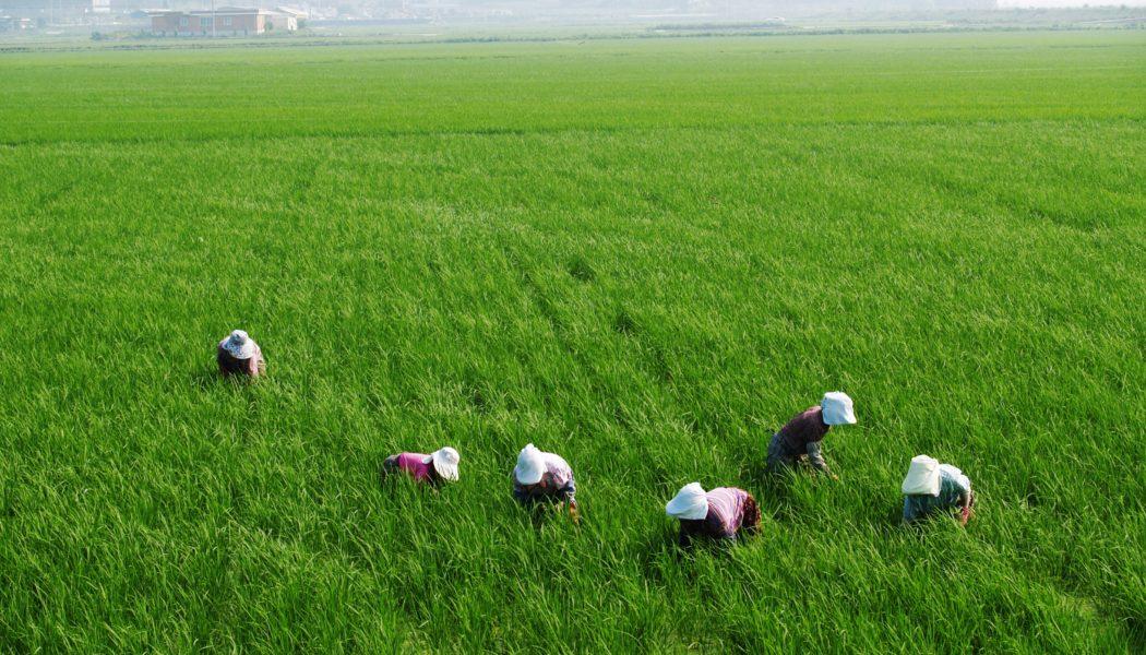 Guía ODS para el sector agroalimentario