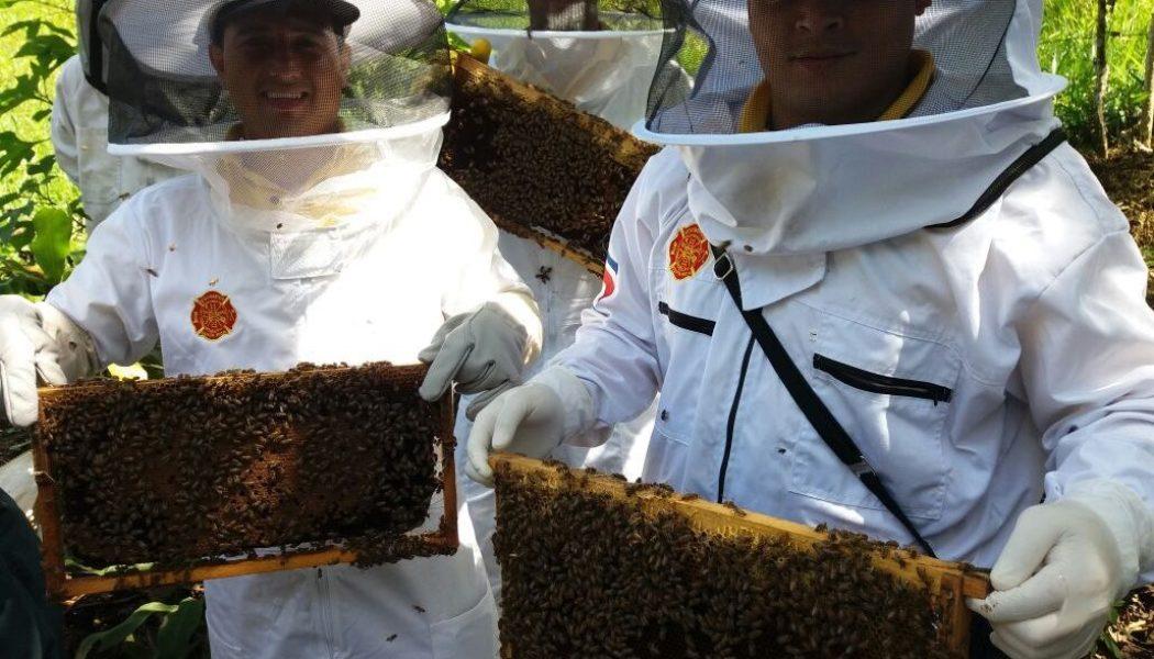 El programa permitió la construcción y equipamiento de fase complementaria del laboratorio de inseminación de abejas reina.